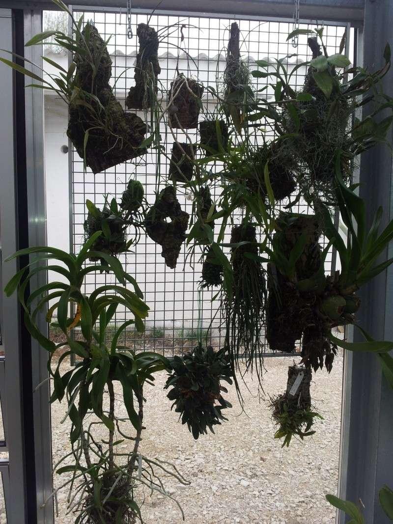 Besuch bei MSB Orchideen in Schwabach 20130431