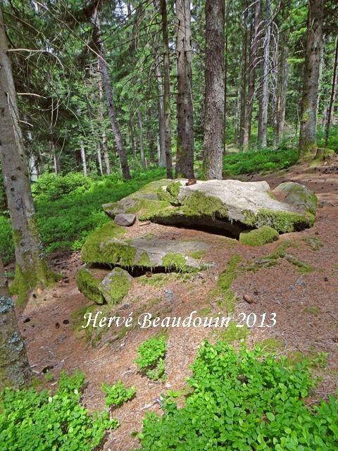 Sortie dans le massif du Fossard Dsc05914