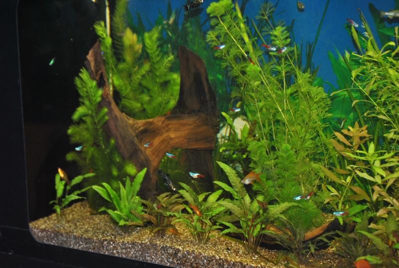 mon aquarium de 360 litres  - Page 3 Aqua_110