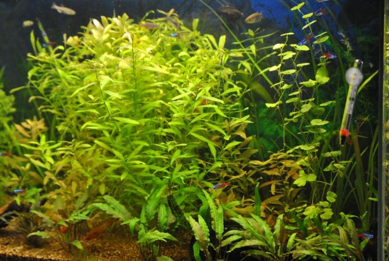 mon aquarium de 360 litres  - Page 3 Aqua_111