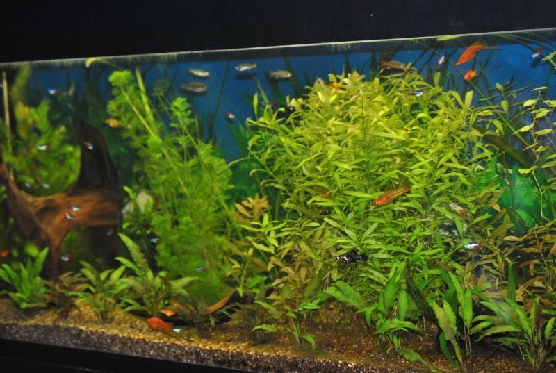 mon aquarium de 360 litres  - Page 3 Aqua_113