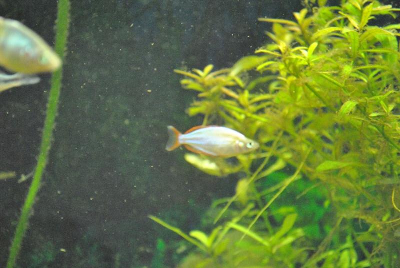 mon aquarium de 360 litres  - Page 3 Paslll11