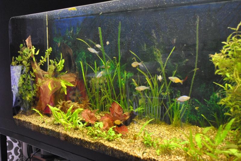 mon aquarium de 360 litres  - Page 3 Paslll18