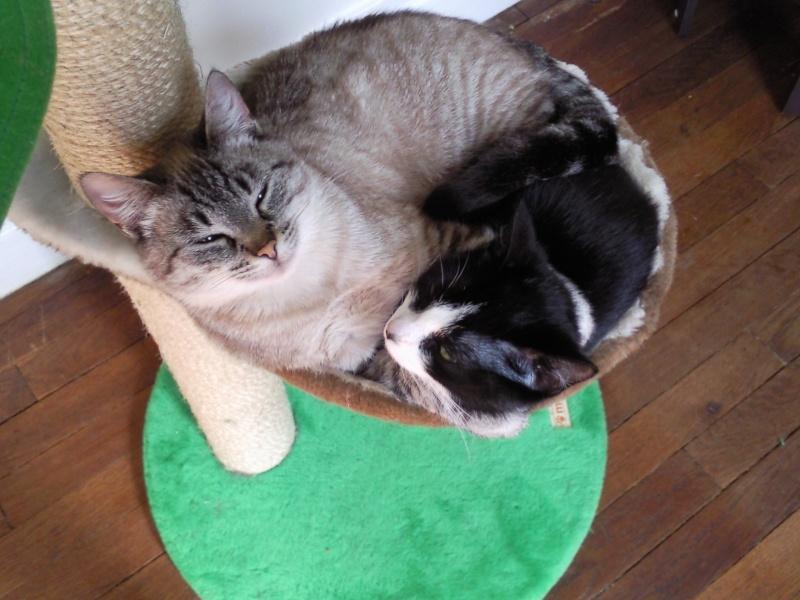 Kiara & Kitty Morgan16