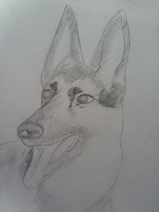 Dessins de chiens - Page 2 Img10810