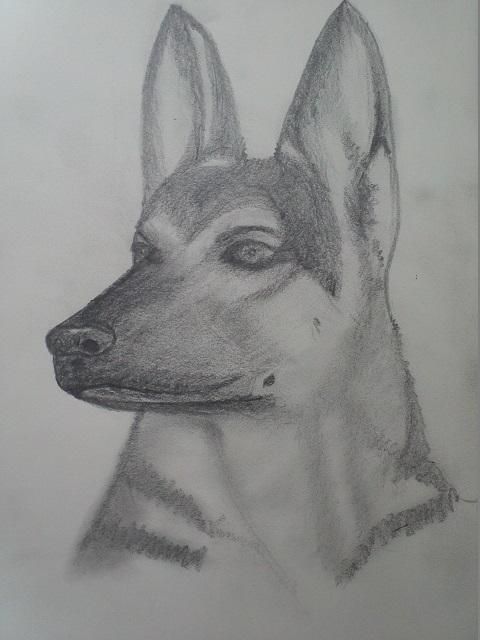 Dessins de chiens - Page 2 Partag10