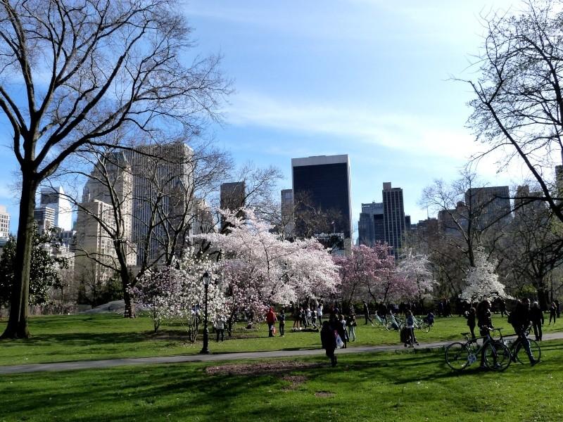 TR à New York du 12 au 18 avril - Page 2 P1010912
