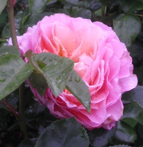 'Marie Curie' !!! 08052040