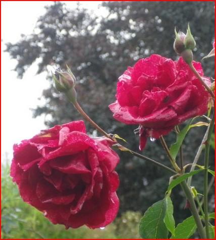 'Red Parfum' !!! 08062032