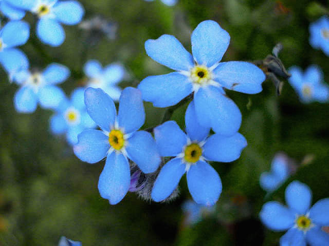 -31- Le bleu au jardin !!! 1110