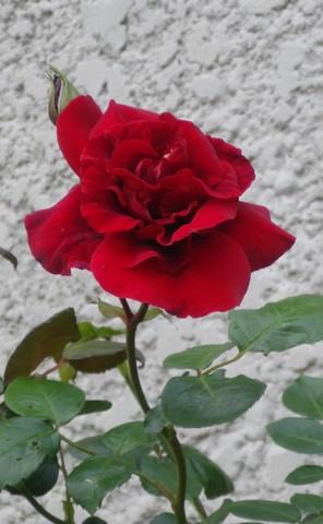 'Red Parfum' !!! 14052038