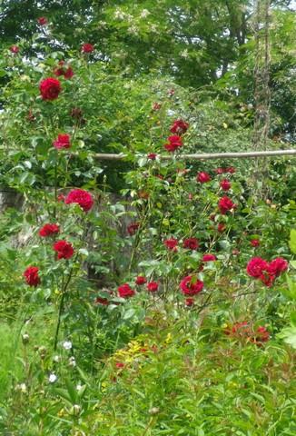 'Red Parfum' !!! 14052047