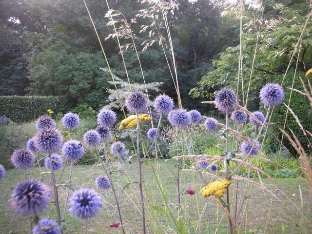 -31- Le bleu au jardin !!! Aout_210