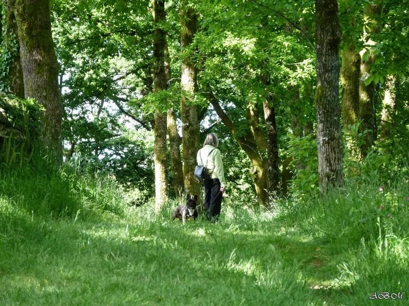 Corto en forêt P1320712