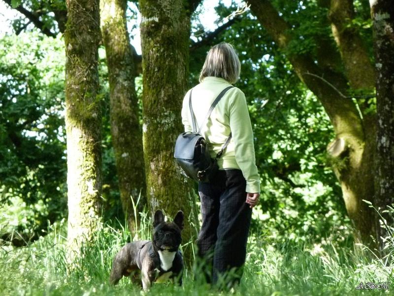 Corto en forêt P1320713
