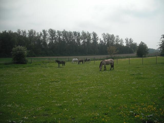PEPITA - ONC poney née en 2003 - adoptée en février 2013 par zoune - Page 3 Dscf4910