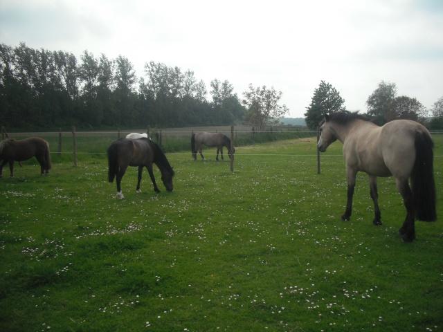 PEPITA - ONC poney née en 2003 - adoptée en février 2013 par zoune - Page 3 Dscf4911