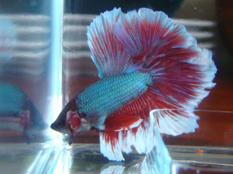 Aquarium de mon Betta  Dsc07110