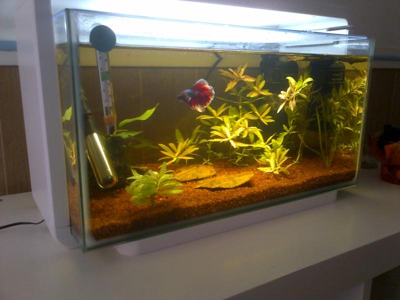 Aquarium de mon Betta  Img-2013