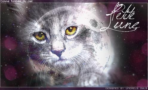 un chat née de l' écumes  Signat12
