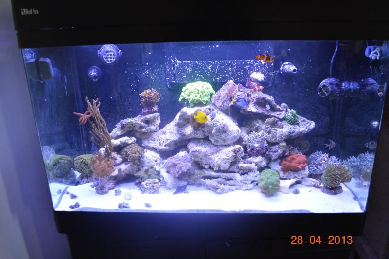 """Mon red sea 250 """"florent59"""" Dsc_0312"""