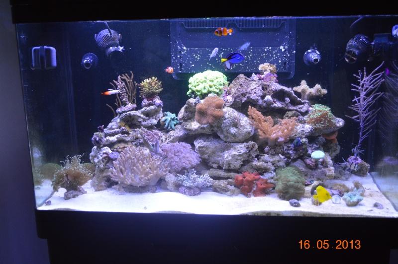 """Mon red sea 250 """"florent59"""" Dsc_0510"""