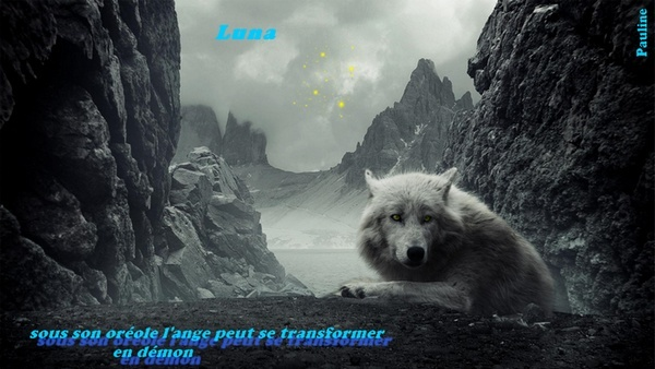 Absence. Loup410