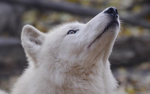    Polar    Polar_13