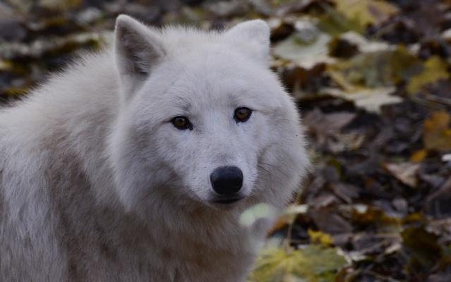    Polar    Polar_14