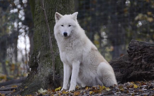    Polar    Polar_15