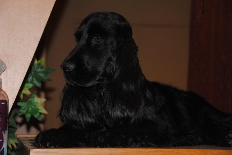 Canine 02310