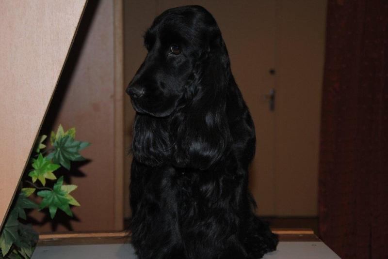 Canine 03310
