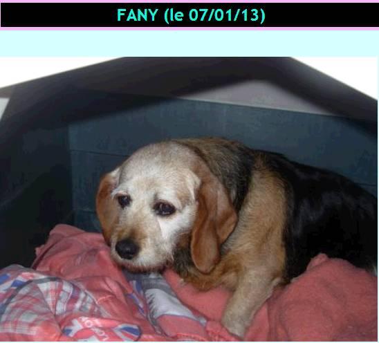 FANY, croisée beagle, 7 ans, à placer uniquement région PACA Fany_b10