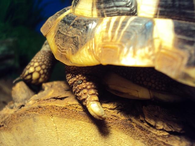 Identification tortue de 2 ans - Page 2 Dsc01731
