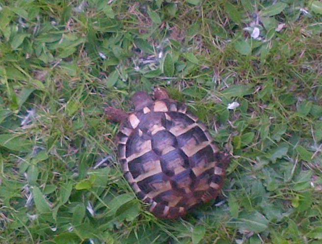Identification tortue de 2 ans Img-2010
