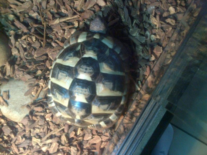 Identification tortue de 2 ans Img-2011