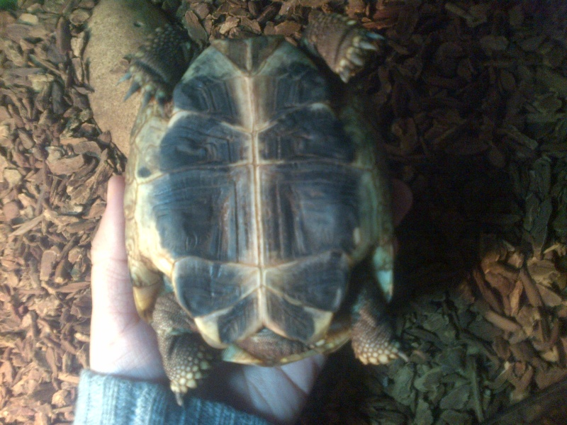Identification tortue de 2 ans Img-2012