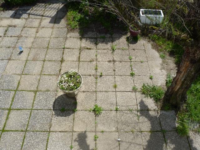 Guêpes dans le jardin comment détruire le ou les nids? P1030810