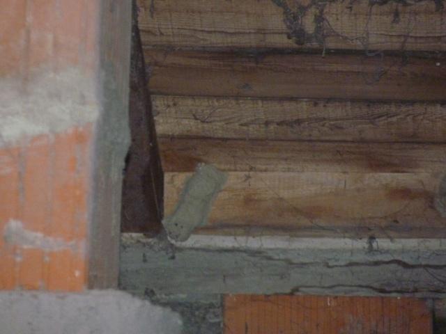 Guêpes dans le jardin comment détruire le ou les nids? P1030813