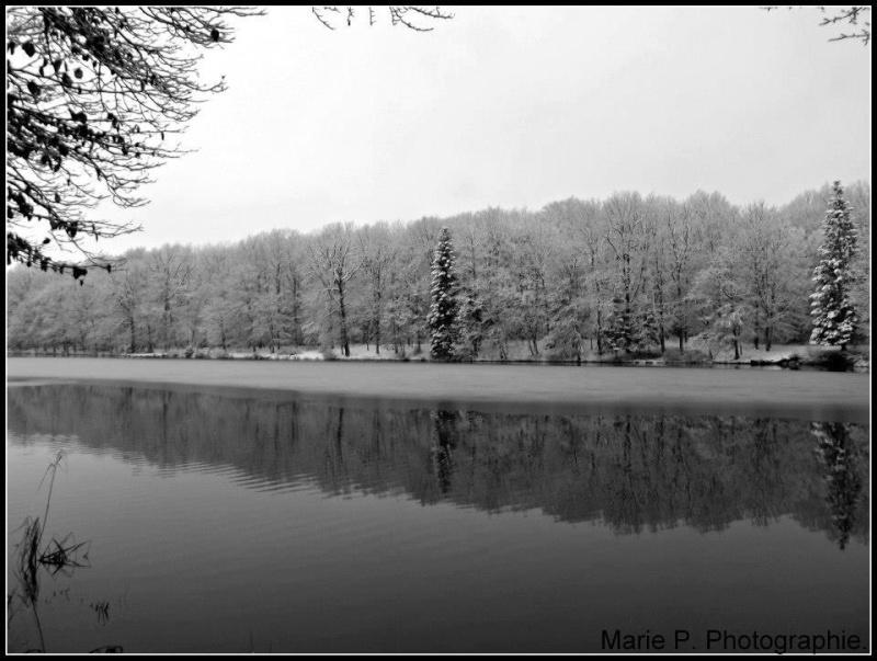 Lac.  11751_11