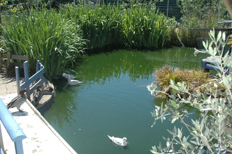 Mon bassin . Dsc_4330