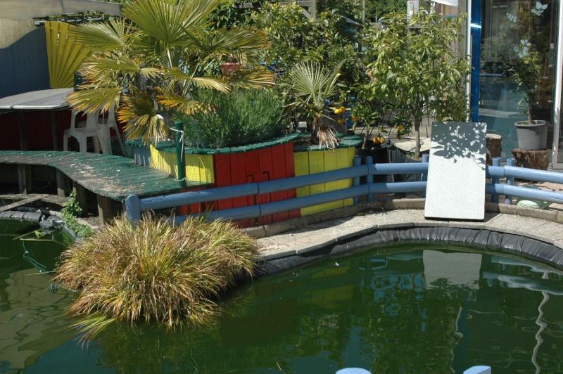 Mon bassin . Dsc_4332
