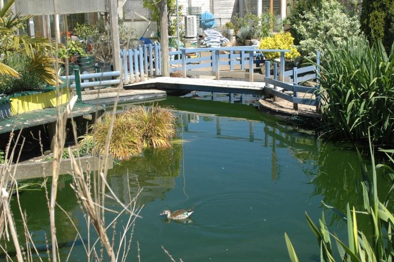 Mon bassin . Dsc_4335
