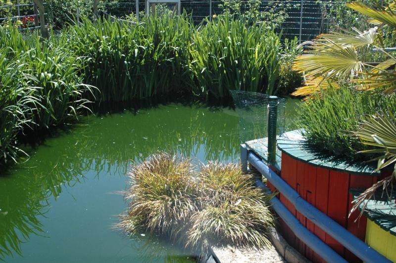 Mon bassin . Dsc_4339