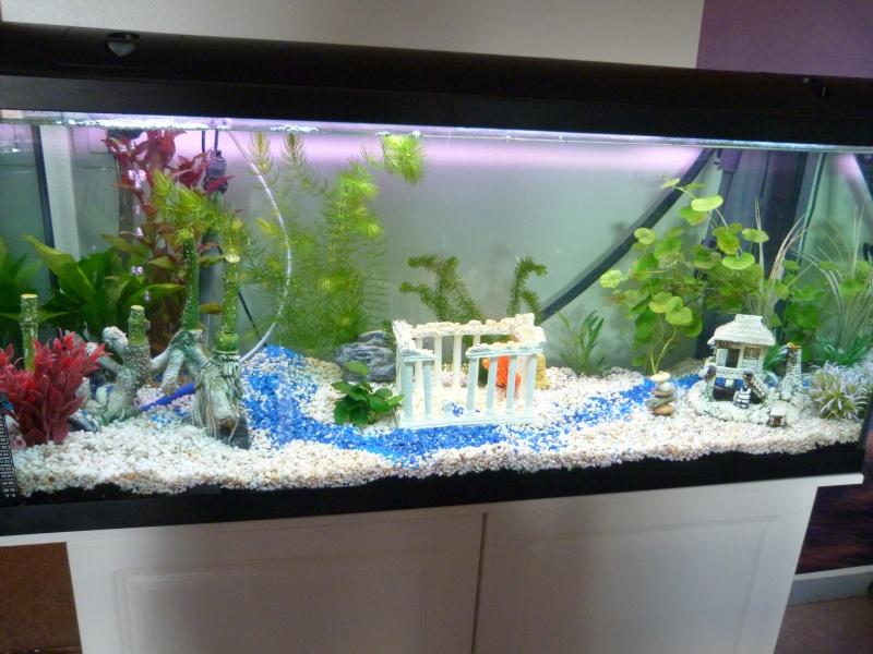 votre avis notre 1er aquarium P1010412