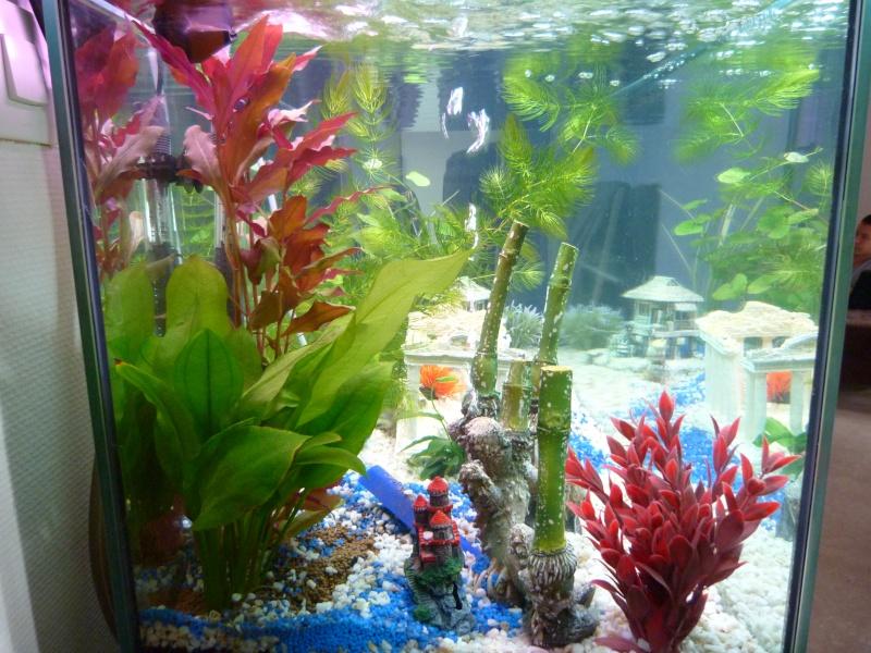 votre avis notre 1er aquarium P1010413