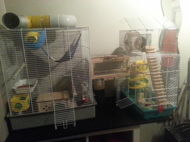 Amélioration de mes cages 20130513