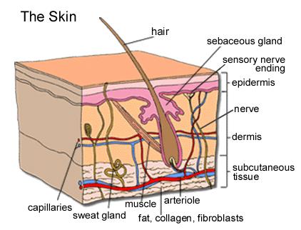 HELIX Advanced Field Manual [02+] Skin10