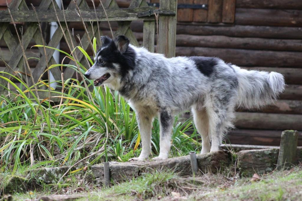 Scottie - mâle - Fourrière de Târgu Frumos - Frais d'adoption réduits - En famille d'accueil dans le 67 12138610
