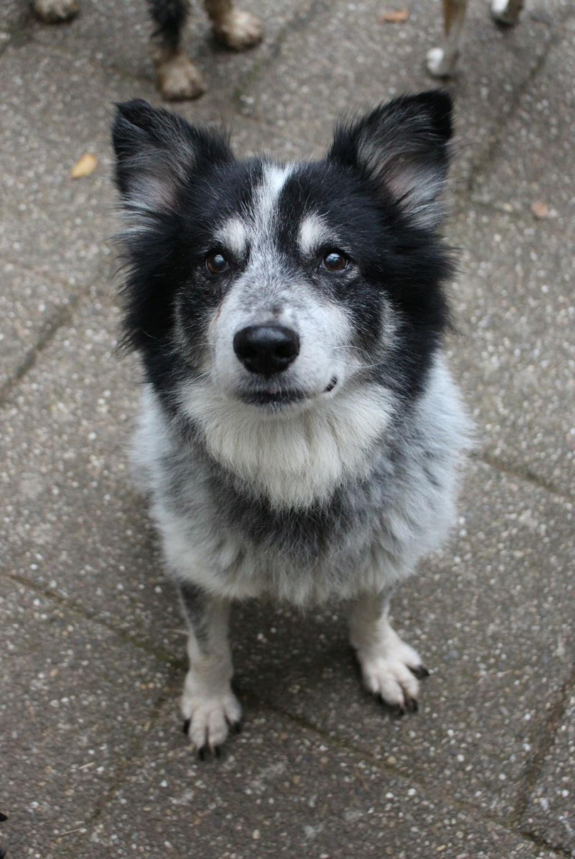 Scottie - mâle - Fourrière de Târgu Frumos - Frais d'adoption réduits - En famille d'accueil dans le 67 12161111
